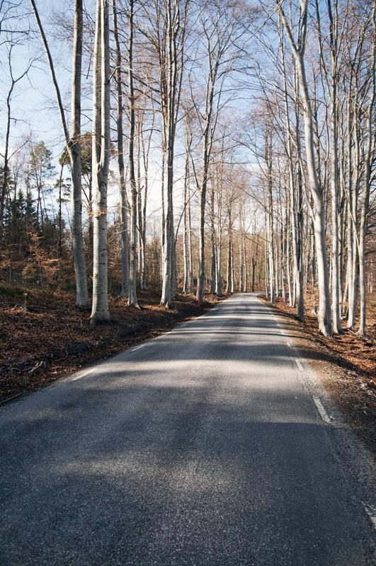 leśna droga prowadząca do Stenstrand
