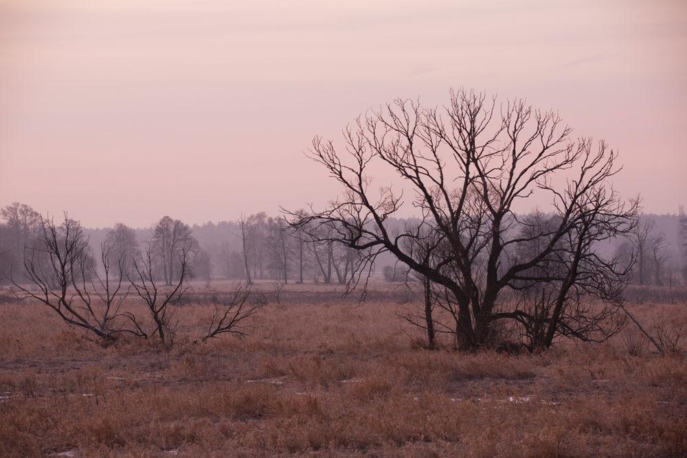 Czwartkowy Mroźny Poranek W Ostrówku